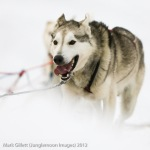 Yukon Quest 2012, Day 2.